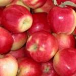 Ambrosia яблоко