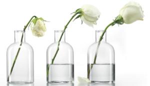 эксперимент с розой и celluvive complex