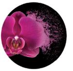 экстракт экзотической орхидеи